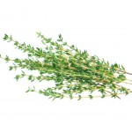 Thyme (not from Balsam)